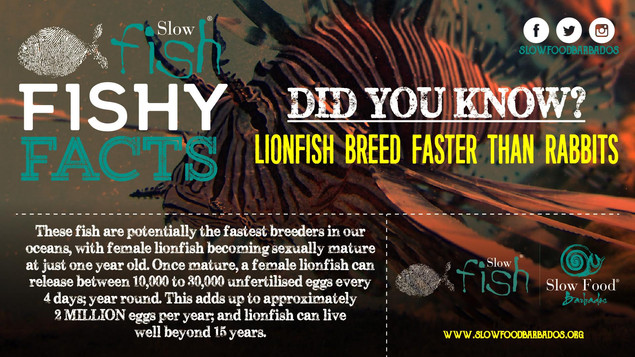Lionfish breeding