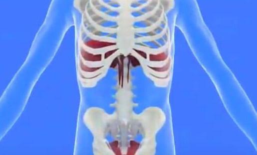 A quoi sert le diaphragme dans notre respiration?