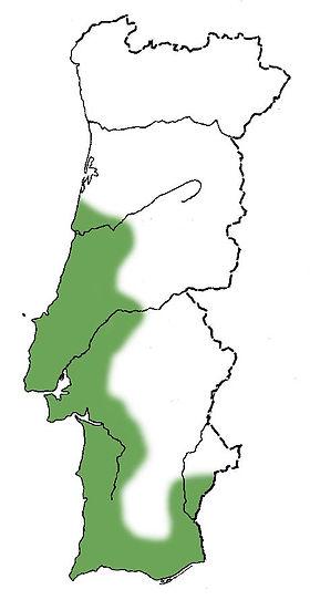 pinheiro-mansomapa.jpg