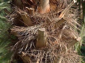 palmeira-anatr.jpg
