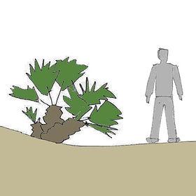 palmeira-anadesenho.jpg