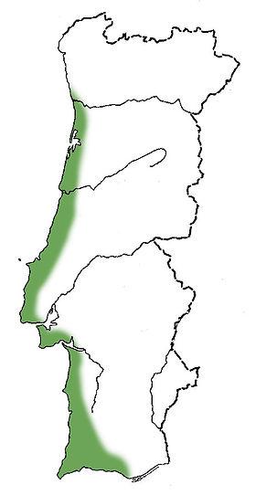 samouco-mapa.jpg