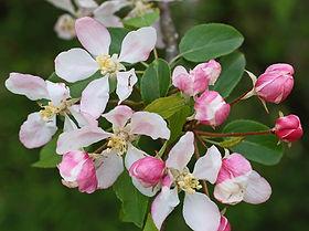 macieira-bravafl.jpg