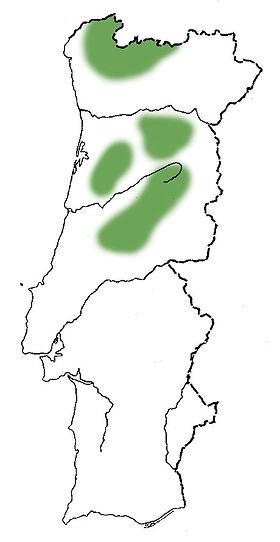 sorveira-branca mapa.jpg