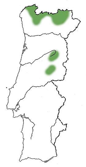 mostajeiro-das-colicasmapa.jpg