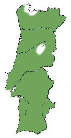 choupo-negromapa.jpg