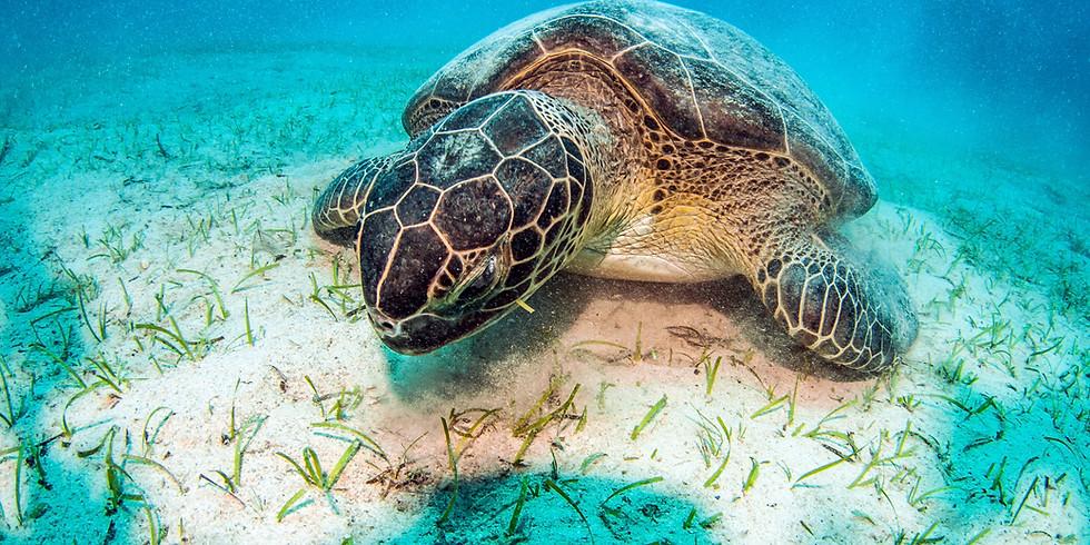 Tauchurlaub am Roten Meer - Vacanza Subacquea al Mar Rosso