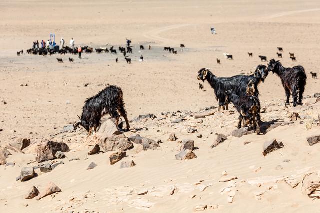Saredrar, Maroc