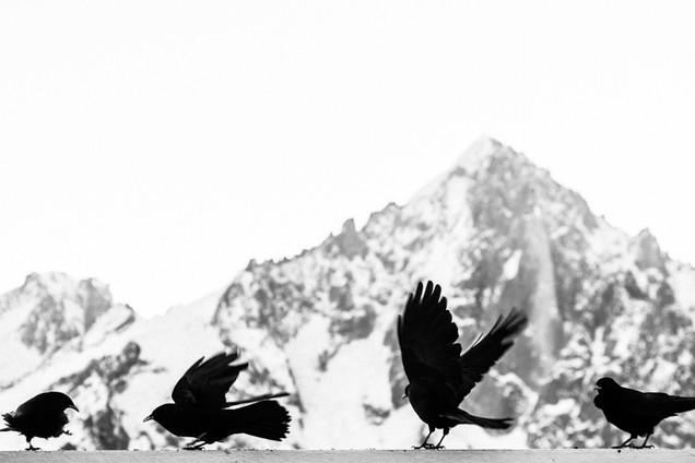 Choucas - Chamonix Mont-Blanc, France