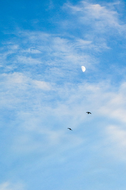The Sky and the Moon and the Birds of Montenegro