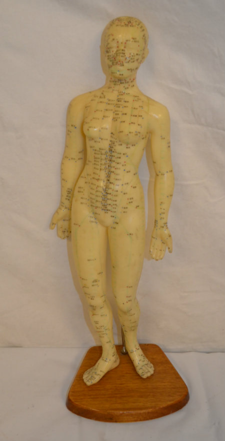 Accupuncture model