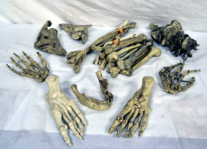 Assorted Loose Bones 2