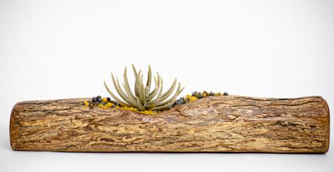 Ahinahina on 'Ohi'a wood
