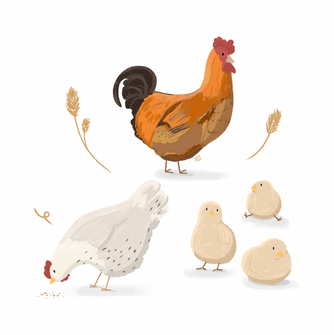Chonky Chickens