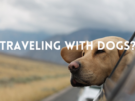 3 Quick Tips for a Stress-Free Hotel Stay with Your Dog