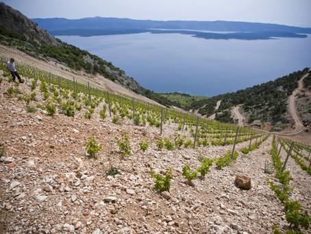 Dalmazia, Posip e Plavac Mali: alla scoperta degli autoctoni croati