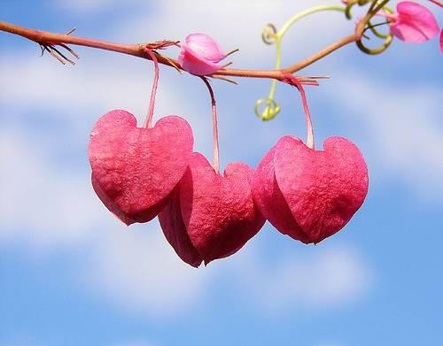 valentine-day-optimized.jpg