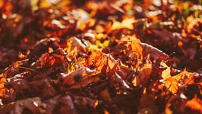 จัดการปัญหาต้นไม้แห้งตายใน Terrarium ด้วยวัสดุธรรมชาติ