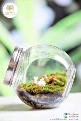 สวนขวด Little Forest terrarium (17).jpg