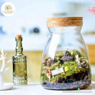 สวนขวด Little Forest terrarium (21).jpg