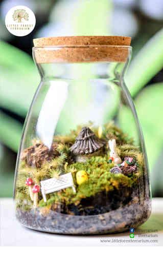 สวนขวด Little Forest terrarium (24).jpg