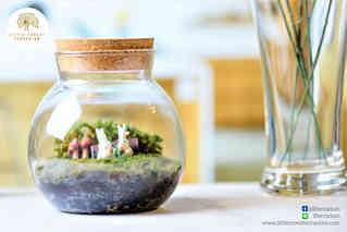 สวนขวด Little Forest terrarium (3).jpg