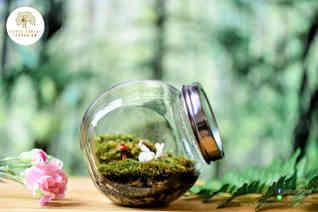 สวนขวด Little Forest terrarium (1).jpg