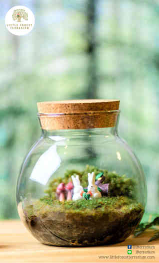 สวนขวด Little Forest terrarium (14).jpg