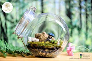 สวนขวด Little Forest terrarium (8).jpg