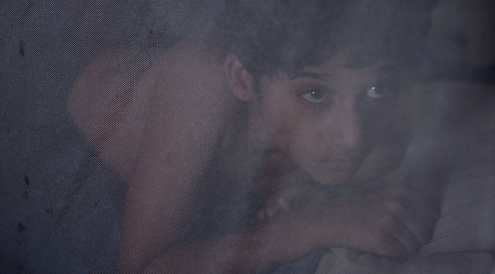 16-Image principale du film-CATDOG.jpg