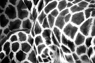 pattern_2_edited.jpg