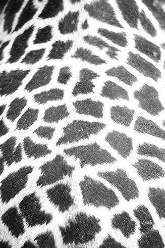 pattern_6_edited.jpg
