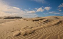 Stockton Sand Dunes. NSW.