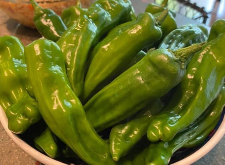 Taste the Market: Shishito Peppers