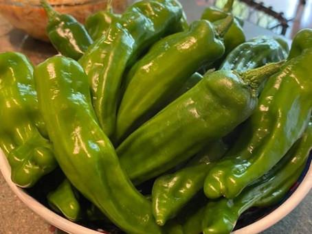 Taste the Market: Shishito Peppers