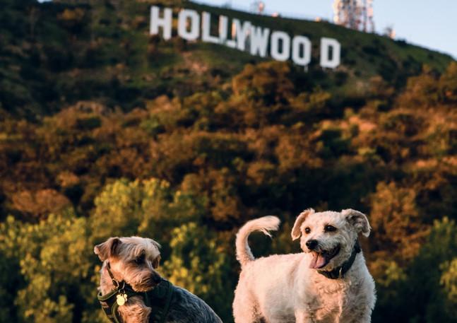 Lake Hollywood Dog Park
