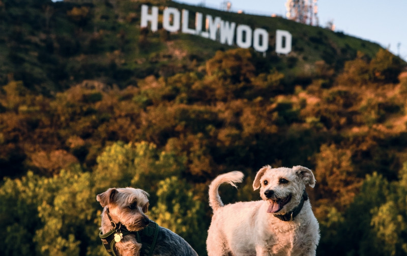 Lake Hollywood Dog Park