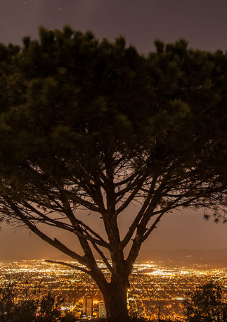 Wisdom Tree