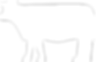 cow-icon.png