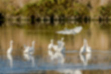 Oiseaux 710_7715-Modifier.jpg