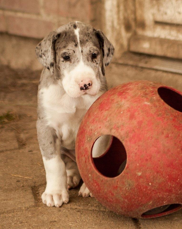 Previous puppies ...