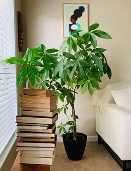 books & plant .jpg
