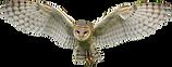 barn-owl-clipart-barred-owl-850891-55383