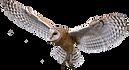 transparent-owl-flying.png