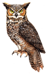 Owl-PNG-File.png