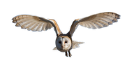 owl-1643088_960_720.png