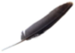 PNGPIX-COM-Feather-PNG-Transparent-Image