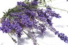 lavendar-sm-250x167.jpg