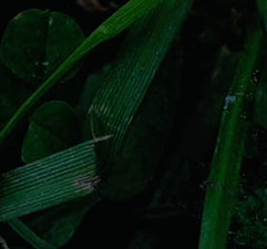 Macro grass texture