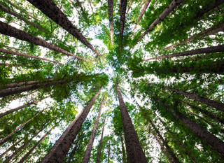 A Look at Our Culture of Sustainability